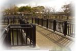 昆陽池野鳥観察橋の写真