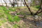 昆陽池ふるさと小径の写真