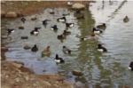 野鳥の写真