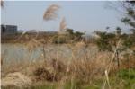 昆陽池橋からの風景写真