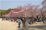 昆陽池公園広場お花見の写真
