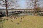 野鳥観察橋の写真