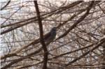 昆陽池公園桜と野鳥の写真
