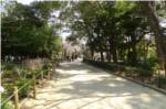 昆陽池公園内道の写真