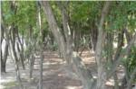 昆陽池公園林の写真