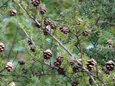 秋篠宮殿下・妃殿下御来館記念 お手植えの木